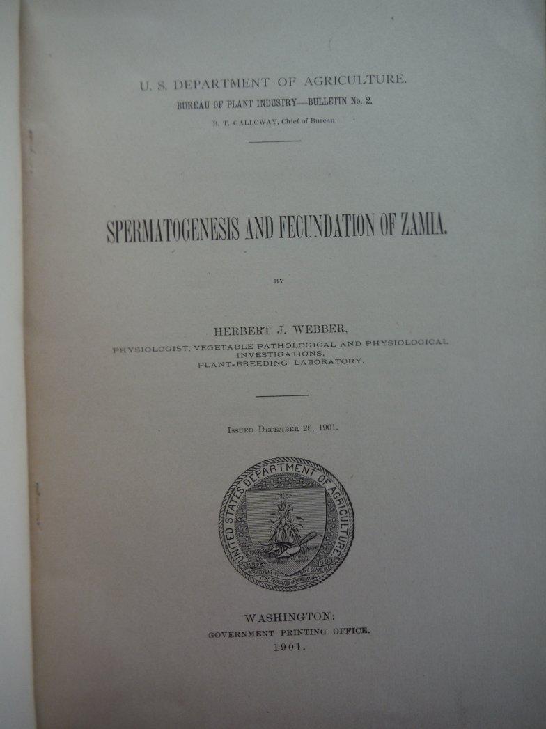 Image 1 of Spermatogenesis and Fecundation of Zamia
