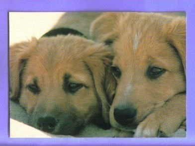 Hallmark Postcard Puppies Dogs Vintage