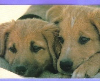 Image 1 of Hallmark Postcard Puppies Dogs Vintage