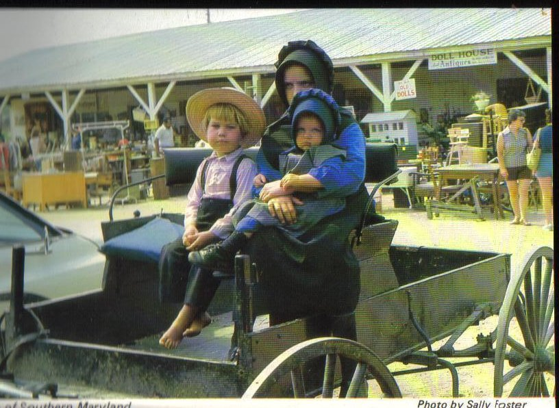 Amish of Southern Maryland Farmers Market in Charlotte Hall Postcard
