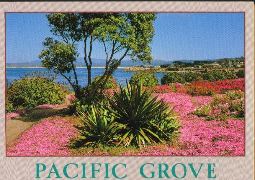 Pacific Grove, California Postcard