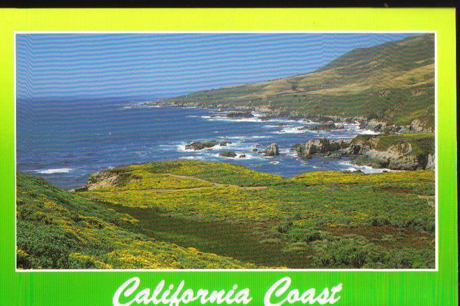 California Coast Wildflowers, Postcard