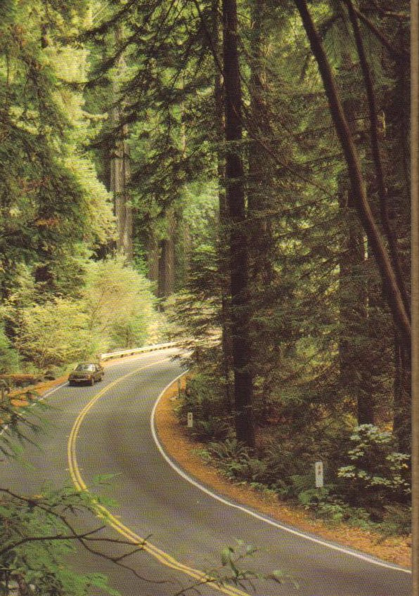 Humboldt County California Postcard Grizzly Creek Redwoods