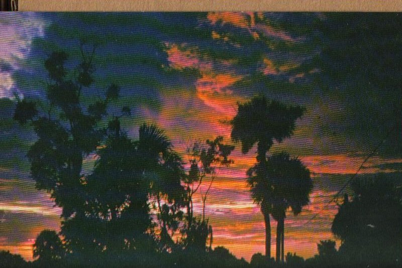 Start of a New Day, Sunrise in Florida Vintage Scenic Postcard