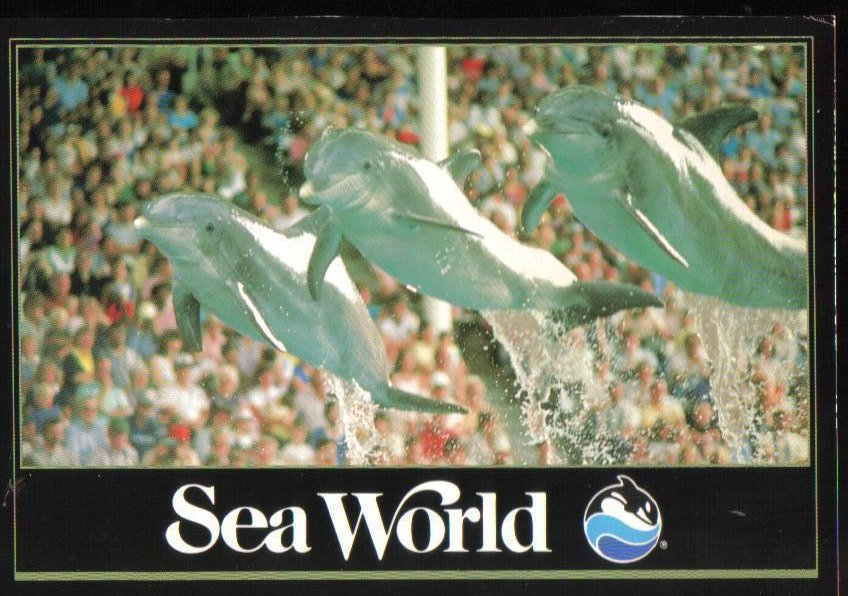 Leaping Dolphins at Sea World, Florida Postcard