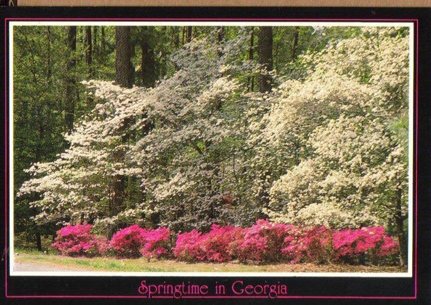 Springtime Azaleas and Dogwoods, Georgia Postcard