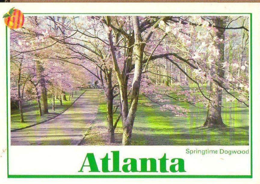 Springtime Dogwood, Atlanta, Georgia Postcard