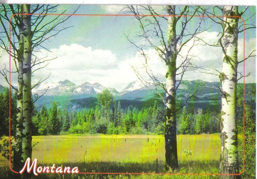 Big Sky Country, Montana Postcard Green fields and Rocky Mountains