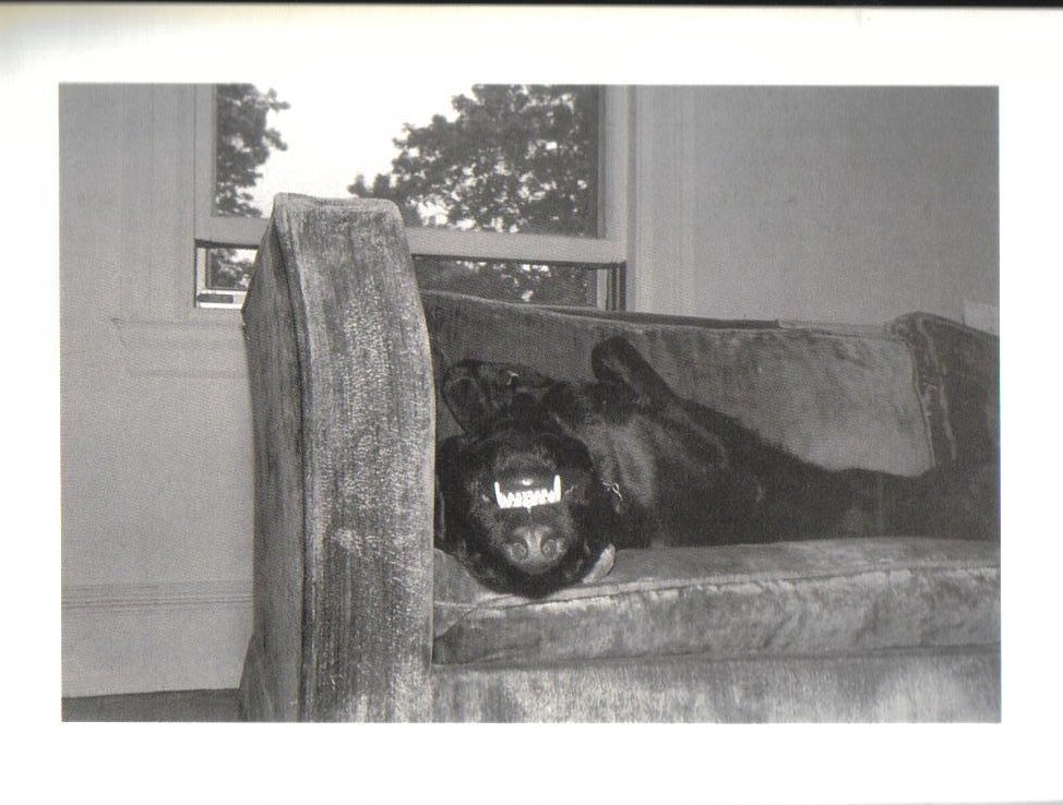 Leela Napping upside down smile Dog Postcard