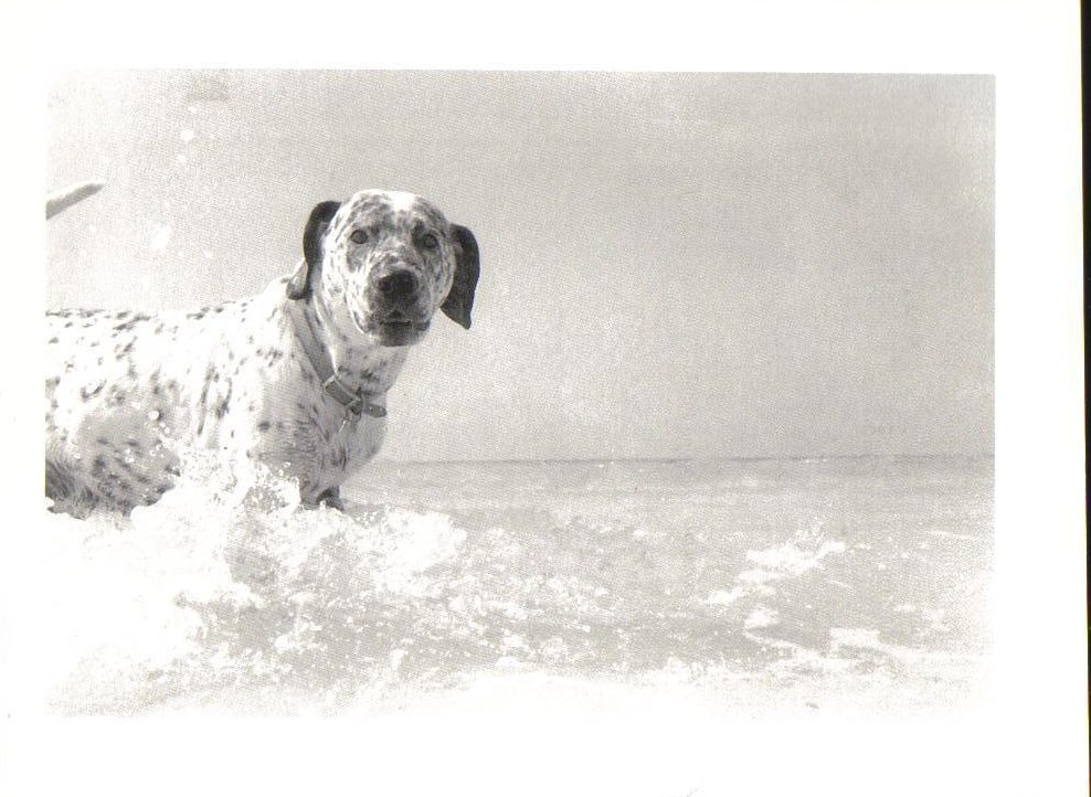 Dog on Vacation Dog Swimming Postcard