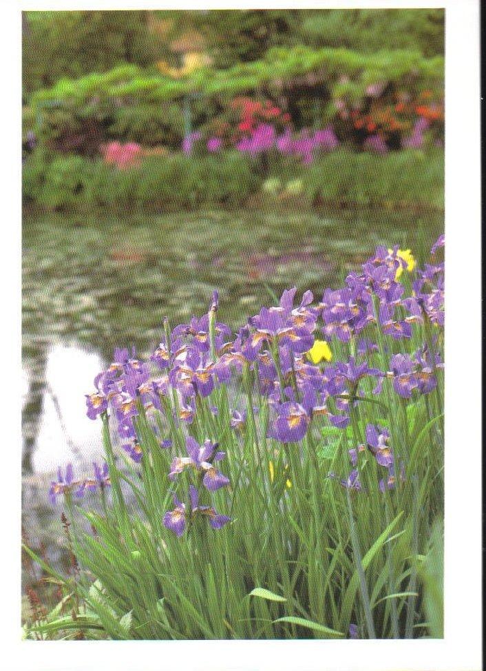 Monets Gardens Series Siberian Iris Postcard