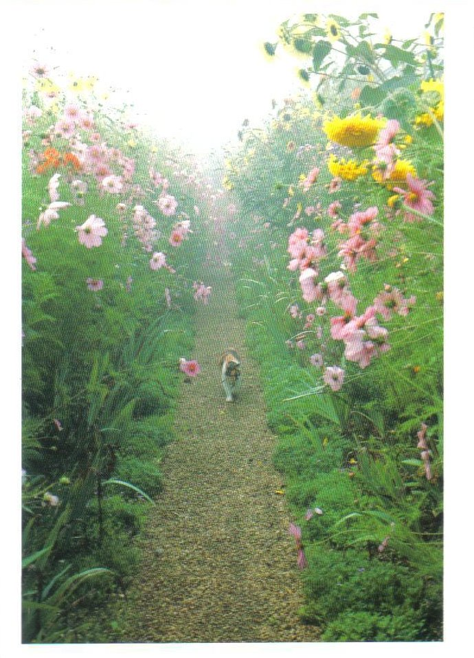 Monet's Gardens Series Pink Cosmos and Kitty Postcard