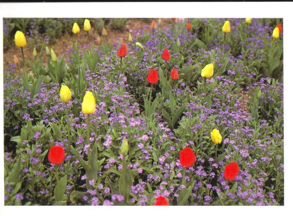 Monets Gardens Series Tulips Flowers Postcard