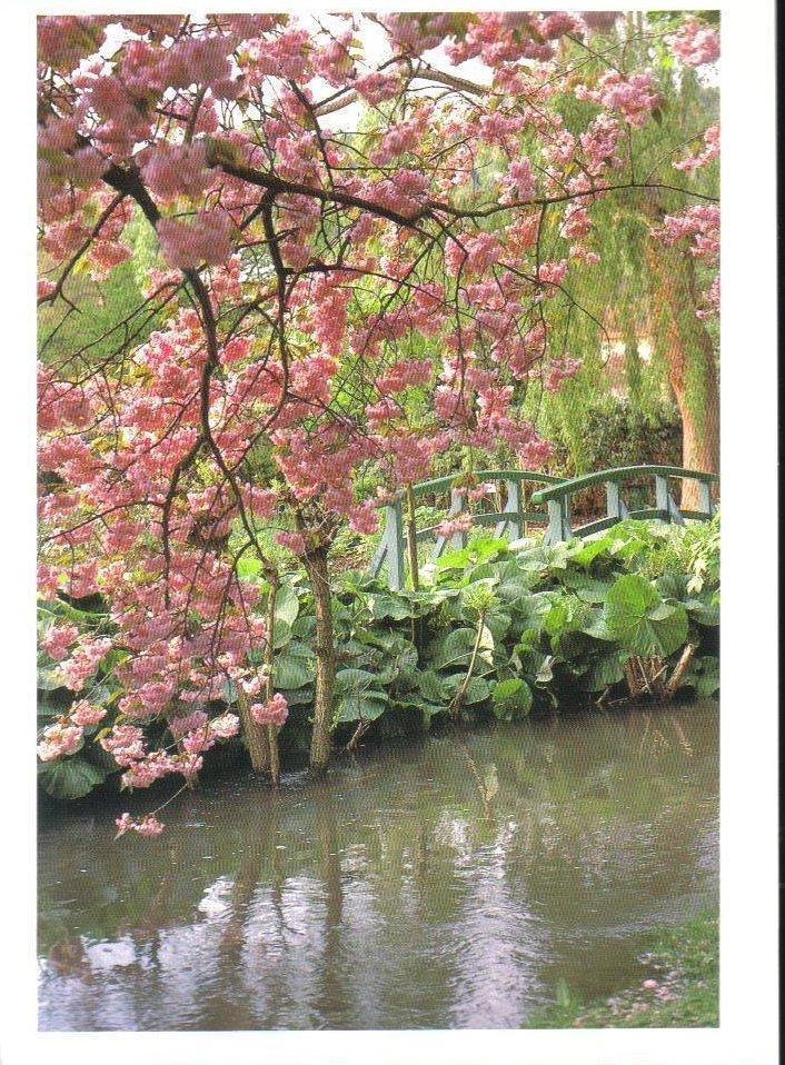 Monet's Gardens Series Cherry Trees Postcard