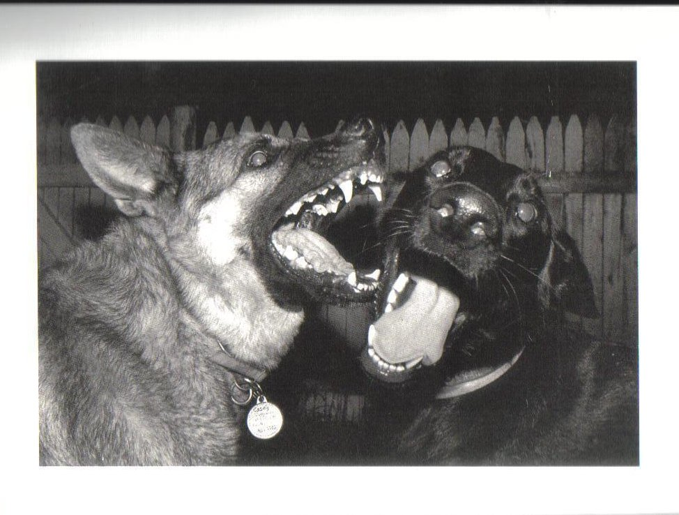 Casey and Leela Fierce Faces Dog Postcard