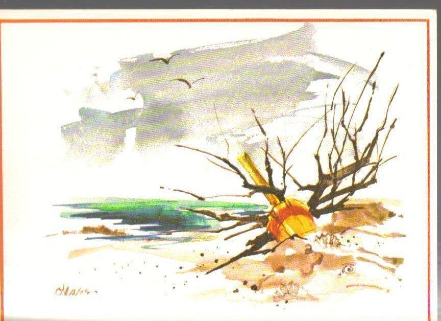 Driftwood on a beach Art Print Postcard