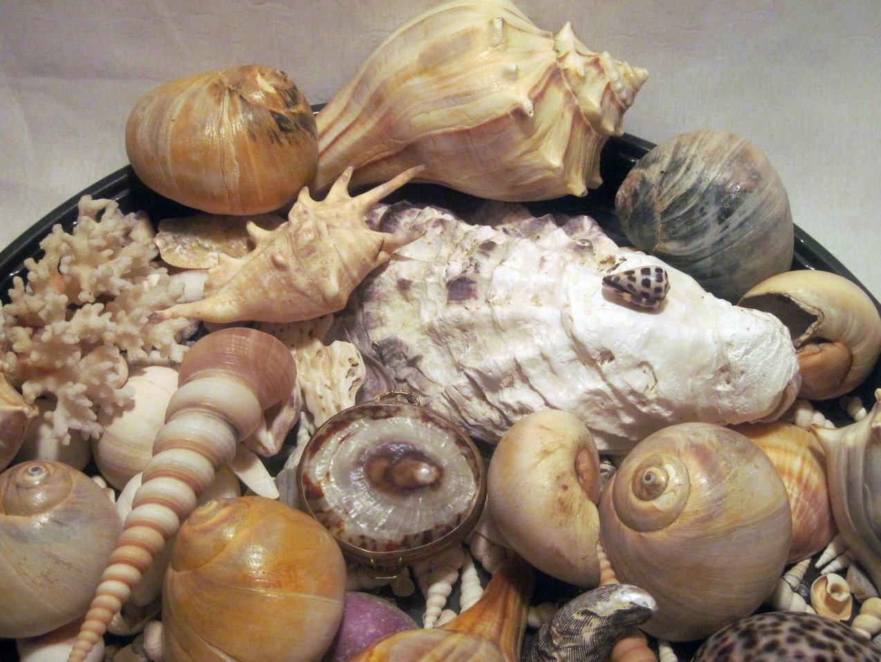 Image 3 of Sea Shell Collection Aquarium Crafts Decor Large Lot