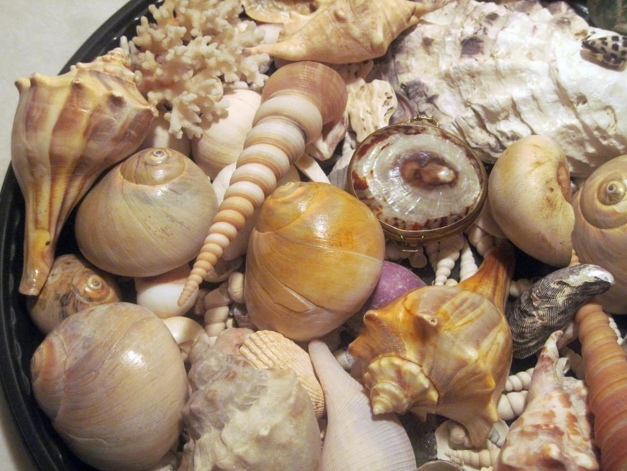 Image 4 of Sea Shell Collection Aquarium Crafts Decor Large Lot