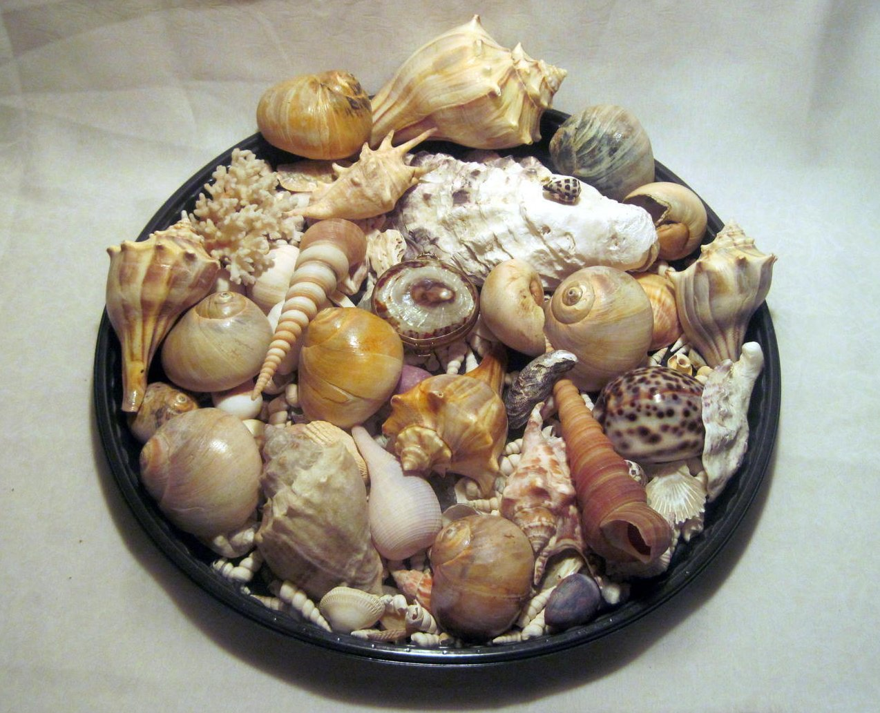 Image 5 of Sea Shell Collection Aquarium Crafts Decor Large Lot